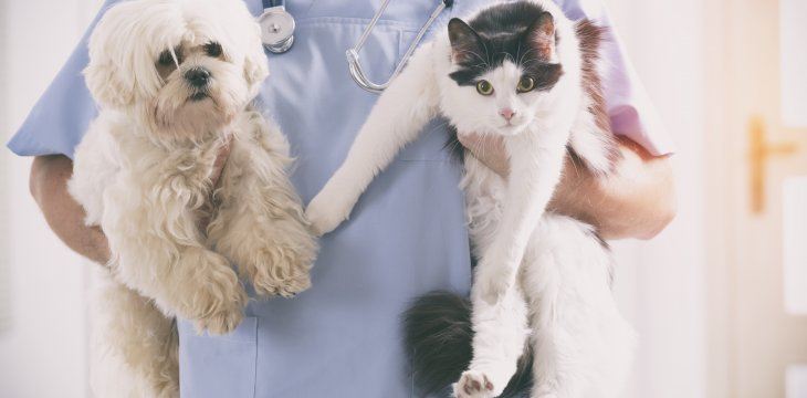 Whats It Really Like To Be A Veterinary Assistant Charter College