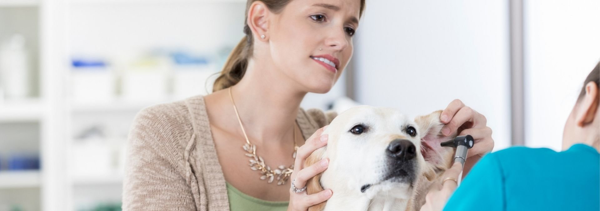 vet assistant with pet owner