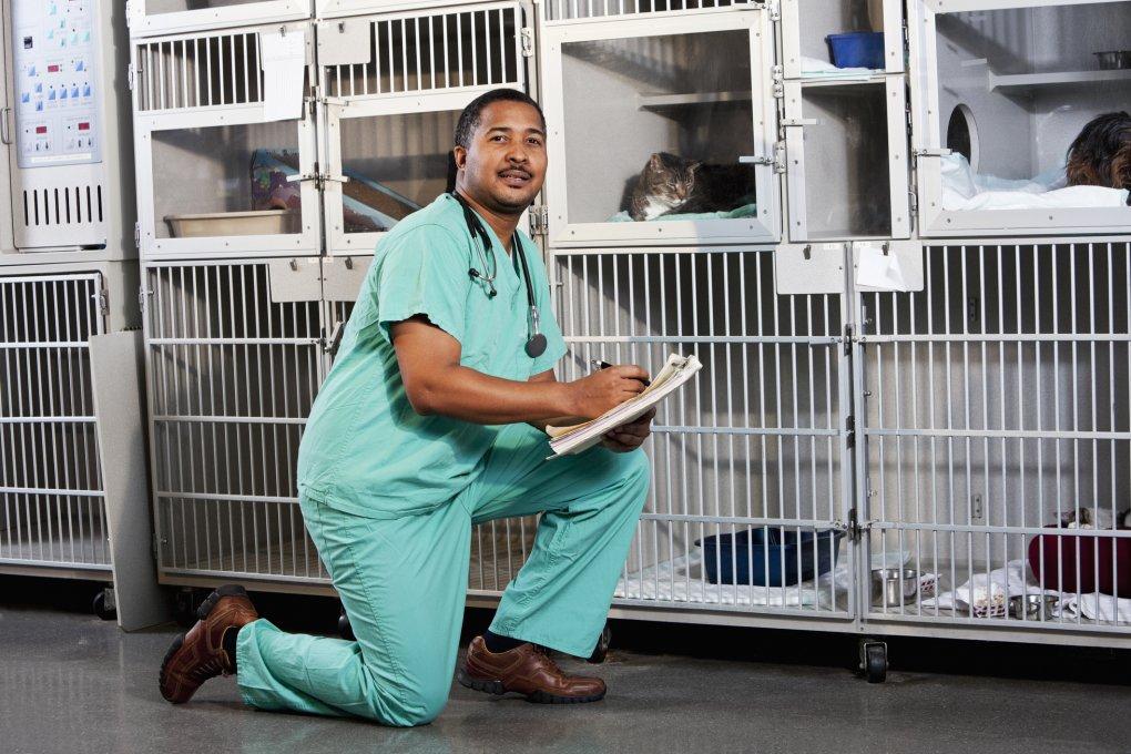Veterinarian Assistant in action