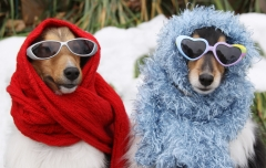 keeping pets safe in winter