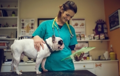 Veterinarian Assistant with dog