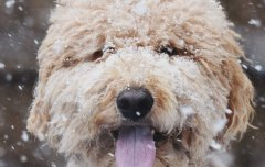 Dog in the winter snow