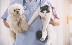 A Veterinary Assistant with pets